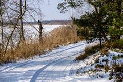 camino romántico de la grava en bosque del árbol del invierno Imágenes de archivo libres de regalías
