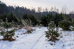 camino romántico de la grava en bosque del árbol del invierno Fotografía de archivo libre de regalías
