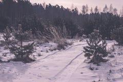 camino romántico de la grava en el bosque del árbol del invierno - efecto retro del vintage Fotos de archivo libres de regalías