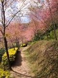 Camino rosado imagen de archivo libre de regalías