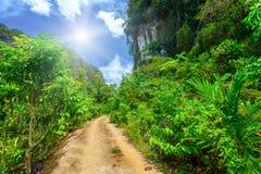 Camino rural con las plantas tropicales Imagenes de archivo