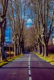 Camino rural con los altos árboles en ambos lados Foto de archivo