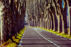 Camino rural con los altos árboles en ambos lados Imagen de archivo