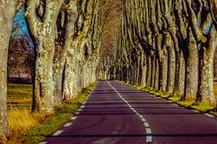Camino rural con los altos árboles en ambos lados Fotografía de archivo