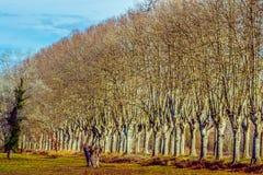 Camino rural con los altos árboles en ambos lados Imágenes de archivo libres de regalías