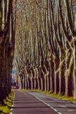 Camino rural con los altos árboles en ambos lados Imagenes de archivo