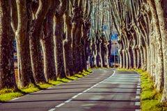Camino rural con los altos árboles en ambos lados Fotografía de archivo libre de regalías