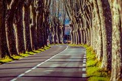 Camino rural con los altos árboles en ambos lados Imagen de archivo libre de regalías