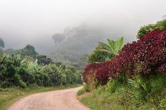 Camino rural con los paisajes de niebla hacia los bosques de la nube que rodean el pequeño pueblo de los cultivadores del café en Foto de archivo libre de regalías