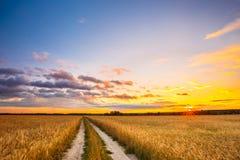 Camino rural del campo con paisaje del campo de trigo Campo amarillo de la cebada en verano Fotografía de archivo libre de regalías