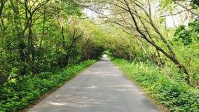 Camino rural en bosque almacen de video