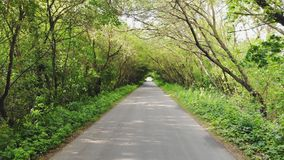 Camino rural en bosque metrajes