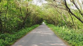 Camino rural en bosque almacen de metraje de vídeo