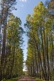 Camino en bosque de la primavera Fotografía de archivo libre de regalías