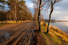 Camino rural entre los árboles de abedul Fotografía de archivo libre de regalías