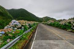 Camino rural hermoso en la isla de Azores Fotos de archivo