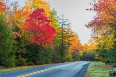 Camino rural a través del follaje de otoño Imágenes de archivo libres de regalías