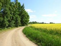 Camino simple hermoso y árboles verdes, Lituania Foto de archivo