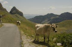 Camino sobre el parque Durmitor en Montenegro Foto de archivo