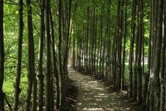 Camino sombrío Foto de archivo libre de regalías