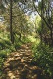Camino sombrío Fotografía de archivo libre de regalías