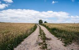Camino sucio con el aruond del campo de maíz, los árboles aislados y el cielo azul con pocas nubes Foto de archivo