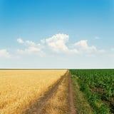 Camino sucio en campos y cielo con las nubes Imagen de archivo libre de regalías