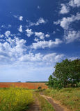 Camino sucio rural Foto de archivo libre de regalías