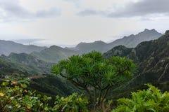Camino TF-12 en el parque rural de Anaga - picos con el bosque antiguo en Te Foto de archivo libre de regalías