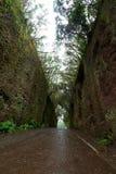 Camino TF-134 en el parque rural de Anaga - und antiguo raro del bosque del laurel Fotografía de archivo libre de regalías