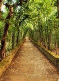 Camino a través de árboles Fotos de archivo