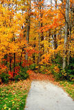 Camino a través de árboles del otoño Foto de archivo