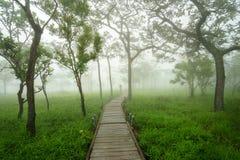 Camino a través de árboles verdes en la niebla de la mañana imagenes de archivo