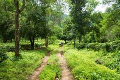 camino a través de la granja verde Imagen de archivo