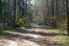 Camino a través de la madera mezclada. Foto de archivo