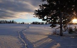Camino a través de la nieve Foto de archivo libre de regalías