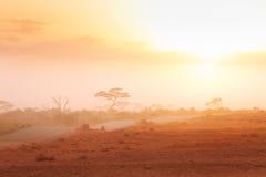 Camino a través de la sabana africana en luz brumosa Fotografía de archivo