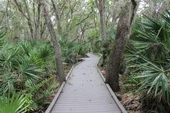 Camino a través de la selva Foto de archivo libre de regalías
