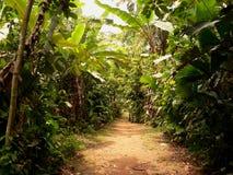 Camino a través de la selva, Panamá imagen de archivo