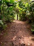 Camino a través de la selva, Panamá imagenes de archivo