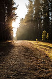 Camino a través de las maderas foto de archivo libre de regalías