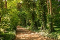 Camino a través de las maderas Imagenes de archivo