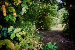 Camino a través de las maderas Fotos de archivo