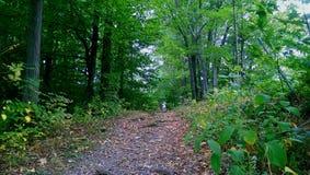 Camino a través de las maderas Fotografía de archivo libre de regalías