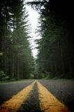 Camino a través de las maderas Fotos de archivo libres de regalías