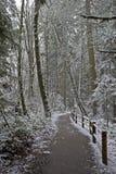 Camino a través de las maderas. Imágenes de archivo libres de regalías
