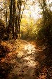 Camino a través de las maderas en caída Imagen de archivo