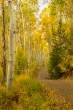 Camino a través de los árboles de Colorado Aspen Fotografía de archivo
