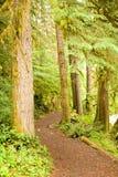 Camino a través de los árboles de hoja perenne Imágenes de archivo libres de regalías
