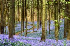 Camino a través de los azules Imagen de archivo